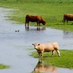 flooded-fieldy