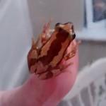 frog edit