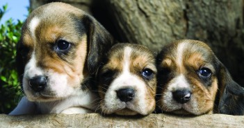 Adoreble puppies
