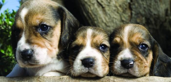 Adoreble puppies