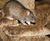 First rodenticide stewardship scheme survey published