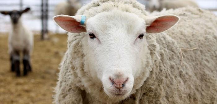 ewe website