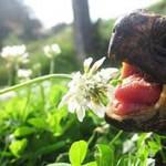 tortoise rspca2