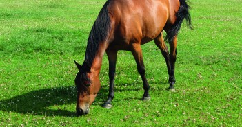 Horse grazing - SM -#ABFAD6