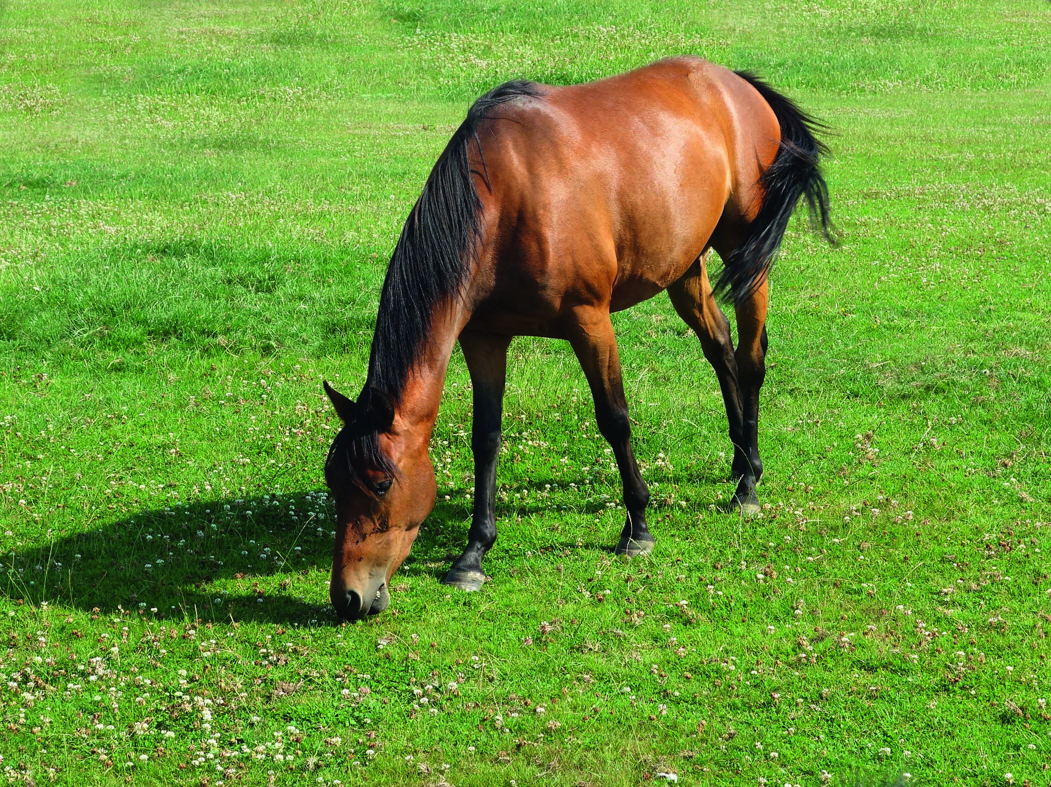 Study will give clues on liver fluke infection in horses