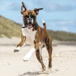 dog website2