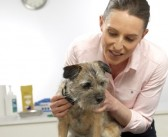 BVA chief says vets' key role should be recognised