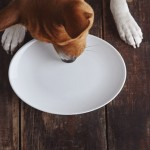 Dog eats from plate on old wooden table