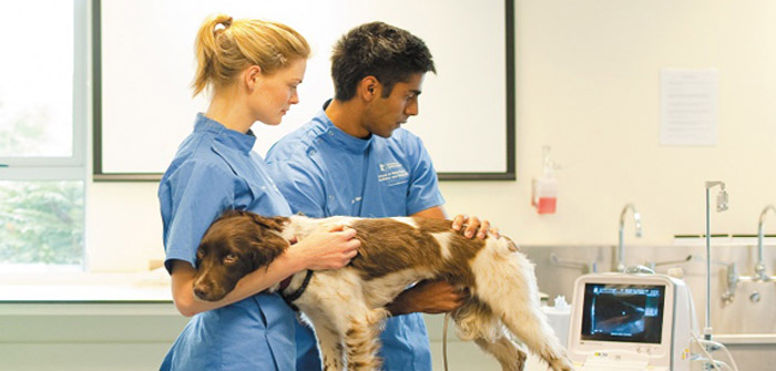 Students performing an ultrasound