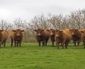 BVA highlights flood risk to livestock welfare