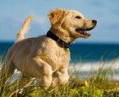 Take part in the biggest survey on pet welfare