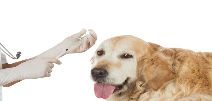 Veterinary clinic
