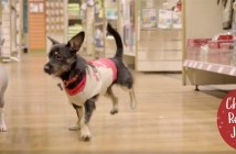 Pets at Home Christmas TV ad