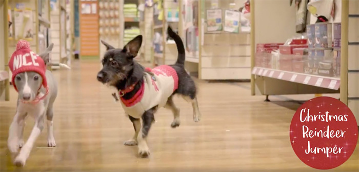 Pets at Home Christmas TV ad