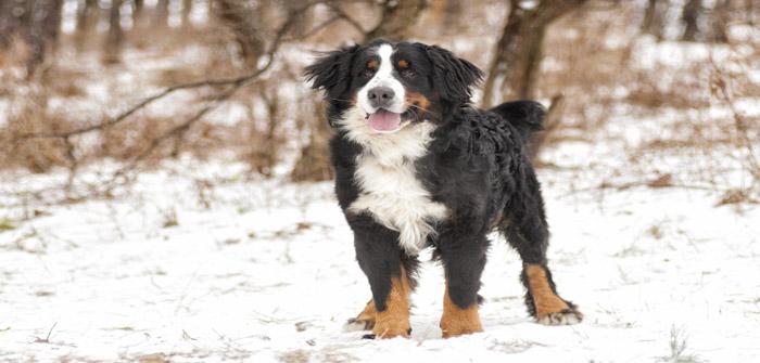 dog looking winter walk