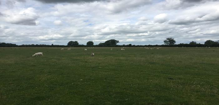 FAI - grazing trial