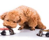 Study warns pet owners over raw meat bug risk