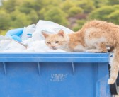 RSPCA highlights the injuries caused to animals by litter