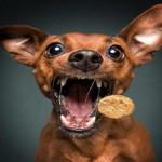 Josera dog food