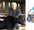 Calf Health - Circle of Improvement