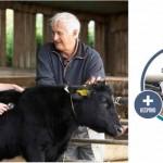 Calf Health - Circle of Improvement