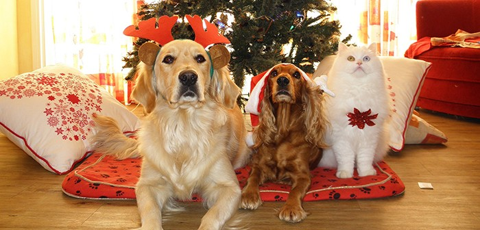 Natures Menu issues warnings to keep pets safe this Christmas
