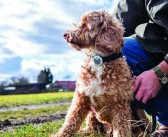 A greater understanding of canine behaviour and wellbeing
