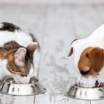 Dog and cat eats food from bowl