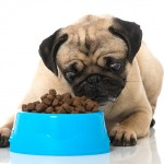 PDSA is tackling a 'pet obesity epidemic'