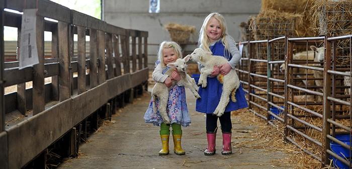 Lambing Weekend 2019
