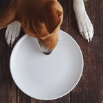Dog eats from plate