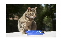 Cat with EU Passport