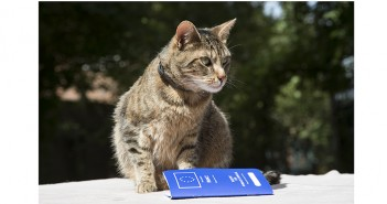 Cat with EU Passport