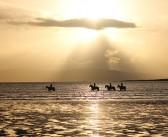 BETA launches equestrian calendar competition