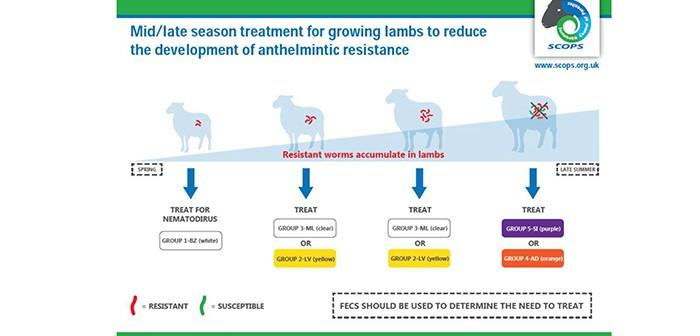 Mid-Late Season Lamb Treatment