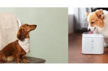Vital Pet Supplies at GLEE and PATS