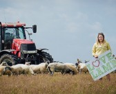 Support for Love Lamb Week seen across the industry