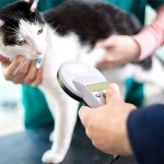 Identifying cat with microchip device