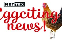 Nettex – Eggciting News