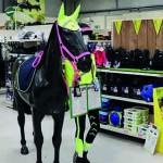 Equine display