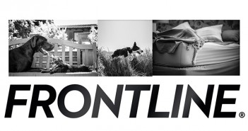 Frontline collage