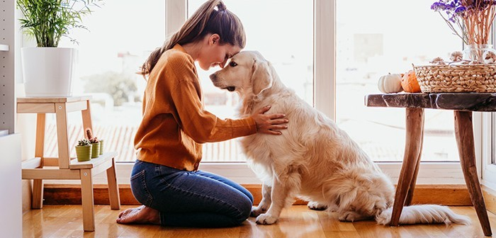 Woman hugging her golden retriever dog at home