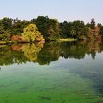 An european pond covered a lot of cyanobacteria,green biofilm gr