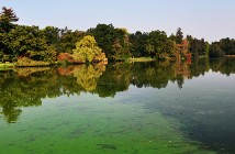 An european pond covered a lot of cyanobacteria,green biofilm gr