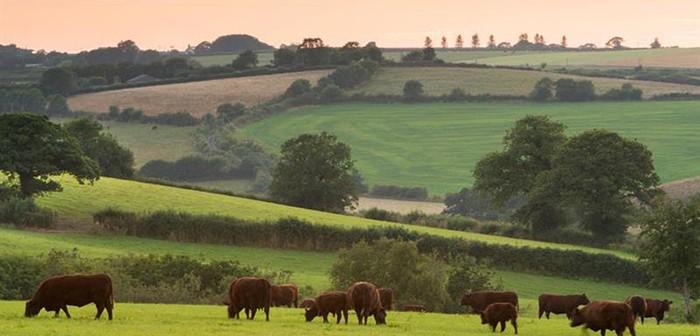 NFU countryside pic