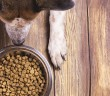 Dog and bowl of dry kibble food