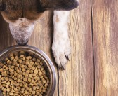 The global environmental impact of pet food production
