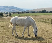 Zoetis invites SQPs to join equine worm control webinar