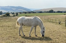 Horse on the South Downs Way