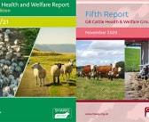 Industry releases updated reports on cattle and sheep health and welfare